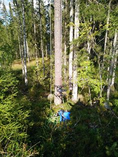 Best drone pics- Drone stuck in trees Aerial View, Bird Feeders, Your Favorite, Most Beautiful, Photos, Pictures, Trees, Outdoor Structures, Outdoor Decor