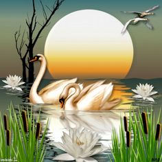 would make a beautiful background behind on oval frame for a card Swan Pictures, Art Pictures, Swan Painting, Art Et Nature, Images D'art, Swans, Animal Paintings, Bird Art, Painting Techniques