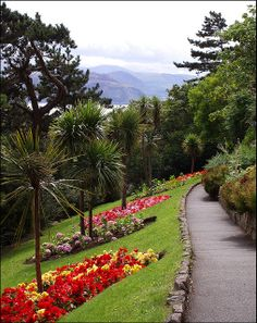 Haulfre Gardens, Llandudno, North Wales. This is a wonderful walk and the ideal place to eat those delicious sandwiches you just purchased from Marks And Spencer's on Mostyn Street. Those mountains in the distance are part of the Snowdonia Mountains with the closest point to the sea being in the area of Penmaenmawr and Llanfairfechan. rjp.