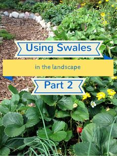 Swales in the landscape. A very practical way to think about swales, which are basically shallow trenches in the landscape designed to hold rainwater.