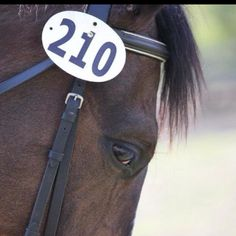 Nothing better than watching horses run