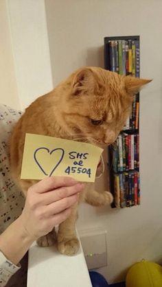 Anche il bellissimo gatto di Silvia è stato colpito al cuore!