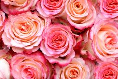 Usos medicinales de las flores - IMujer