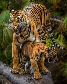 My Mother | Photo by ©Todd Lahman  #WildLives
