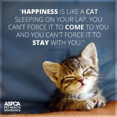 Happiness is like a cat Like A Cat, I Love Cats, Crazy Cats, Cute Kittens, Cats And Kittens, Kitty Cats, Ragdoll Kittens, Tabby Cats, Bengal Cats