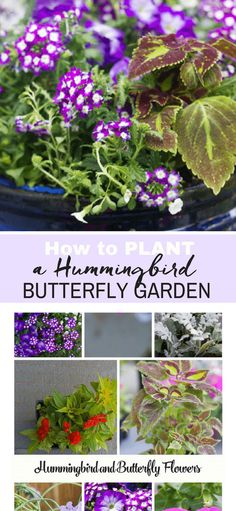 How to plant a beautiful butterfly and hummingbird garden. It's all in the plants, and we have a long list of plants which butterflies and hummingbirds love. If you love gardening you will want to pin this list. via @tinselbox_