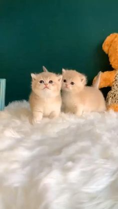 Kittens Cutest Baby, Cute Little Kittens, Cute Baby Cats, Cute Cats And Kittens, Funny Kittens, Kitty Cats, Baby Animals Pictures, Cute Animal Photos, Cute Animal Videos