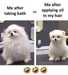 Funny Cartoon Memes, Funny Animal Jokes, Funny Friend Memes, Very Funny Memes, Cute Funny Quotes, Funny School Jokes, Some Funny Jokes, Funny Relatable Memes, Funny Facts