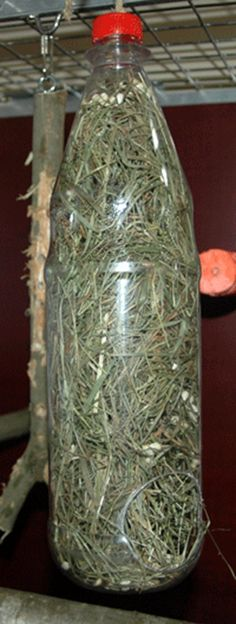 DIY hay feeder: Drill or cut a big 'feeding' hole in the bottom and a hanging hole in the lid then fill it with hay or paper shred plus seeds and treats throughout! Rabbit Cages, Bunny Cages, Rabbit Toys, Pet Rabbit, Rabbit Burrow, Rabbit Feeder, Hay Feeder, Bird Feeder, Guinea Pig Care
