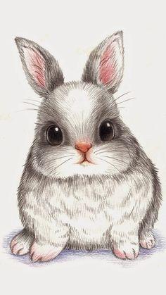 萌 兔 彩 铅 conejos bunny drawing, rabbit drawing и draw Cute Animal Drawings, Cute Drawings, Drawing Sketches, Drawings Of Cats, Cute Animals To Draw, Pencil Drawings, Animal Sketches, Cutest Animals, Colorful Drawings