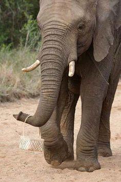 Safari Weddings in South Africa | Plan a wedding in Zululand | http://www.rhinoriverlodge.co.za/functions.php