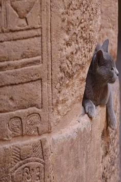 Cats In Ancient Egypt, Egyptian, Animals, I Love, Animales, Animaux, Animal, Animais