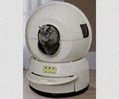 the litter robot a self cleaning cat litter box the cat loves it and so do we