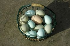 Ameraucana eggs, my dad brought these home