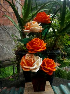 Rosa mexicanas