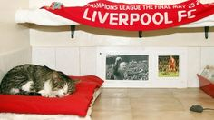 Awww... The Anfield Cat