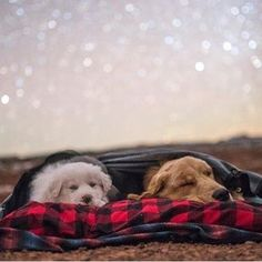 Camping under the stars. ✨ #campingwithdogs @tmaag_photography