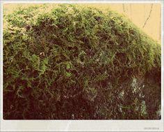 mossy rock2