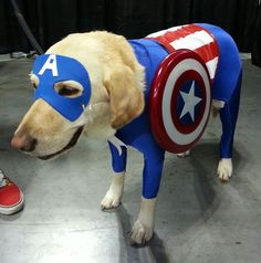 A Dog Dressed as Captain America is the Cosplay You Didn't Know You Wanted [PIC]