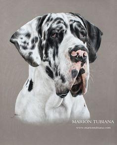 Colored Pencil Artwork, Dog Artist, Black And White Dog, Cow Art, Dog Wallpaper, Dog Paintings, Pastel Art, Weimaraner, Art Challenge