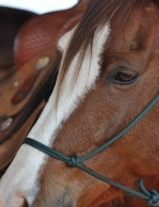 About Brenham, Texas: Home of South Texas Tack -- From the STT blog. | blog.southtexastack.com