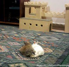 Bunny Castle