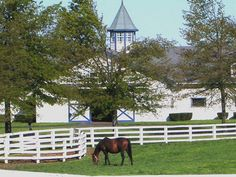 Lexington, KY Horse Farms...Nowhere on earth as beautiful to me! Google Image Result for http://pics4.city-data.com/cpicc/cfiles6496.jpg