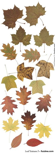 leaf graphics. high resolution texture