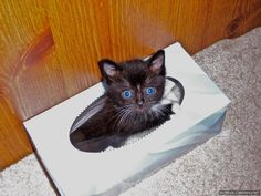 playing in the tissue box...