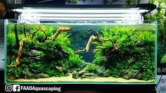 Layout by Zhang Jin Feng at CIPS Exhibition in Guangzhou China.  #FAAO #Aquascaping #Planted #Aquarium #Aquatic #Plant #Freshwater #aquascape #plantedtank #plantedaquarium #China #AquascapingMakesMyWorldGoRound #CIPS #GreatWall