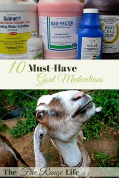 Looking for the best goat breeds for your homesteading needs? Here's different breeds of goats and why they'll benefit you and your backyard farm. Cabras Boer, Agriculture, Goat Toys, Goat Pen, Goat Care, Nigerian Dwarf Goats, Raising Goats, Raising Chickens, Mini Farm