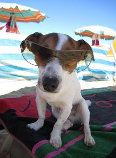 ♥ Beach Dog