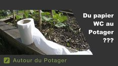 Why use Toilet roll in the vegetable garden ? Plantation, Image Categories, Permaculture, Horticulture, Vegetable Garden, Gardening Tips, Commerce, Vegetables, Voici