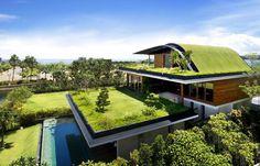 Make your #RooftopGarden dream come true