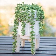 Wrought Studio Donkey Tail String of Pearls Succulent Plant in Pot Topiary Plants, Ivy Plants, Potted Trees, Fake Plants, Green Plants, Hanging Plants, Potted Plants, Inside Plants, Balcony Plants
