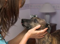 Tips Cleaning Your Dog's Ears