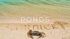Crab and an inscription summer on sand, the drawing of a palm tree.  #bay #beach #caribbean #coast #coastline #cockleshells #egypt #exotic #indian #inscription #island #lagoon #landscape #letter #maldives #maldivian #nature #ocean #paradise #recreation #relax #resort #rest #sand #scratched #sea #seascape #seashore #seaside #shoal #shore #shoreline #sunshine #superscription #surf #tahiti #thailand #thoddoo #tourism #travel #tropic #tropical #vacation #water #wave #word #written #palm tree…