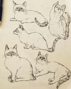 January 2018 sketchbook on Behance Animal Sketches, Animal Drawings, Art Sketches, Cat Anatomy, Cat Sketch, Cat Pose, Creature Drawings, Cat Drawing, Sketch Drawing
