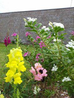 inseto na flor