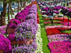103 best beautiful flower gardens images on pinterest beautiful beautiful flower garden mightylinksfo