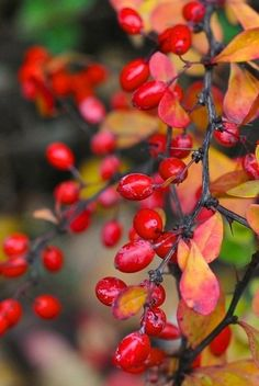 Autumn & Eve  ~Kennedy<3