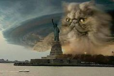 Cloudy with a chance of meowww