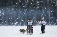 Du chien de traineau en Alaska