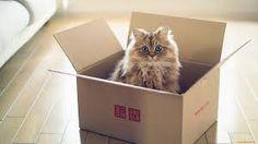 Картинки по запросу котики