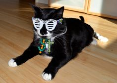 """Etsy seller NotsoKittyShop is selling these """"Kitty West"""" costumes."""