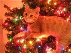 Cute Christmas decor lol