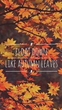 Autumn Leaves - Ed Sheeran Lyrics Lockscreen