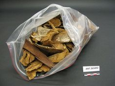 Bark chips; many large chips of red- colored hawili bark; used for dyeing--hawili; (qukaqna) YPM ANT 263492 - Bark chips, Yale Peabody Museum of Natural History