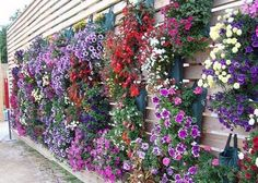 yard landscaping and garden designs