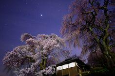 https://flic.kr/p/FneRFU | しだれ桜と星空の下 | 勝間薬師堂 長野県伊那市